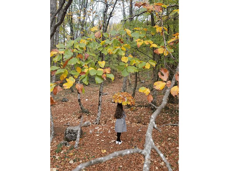 Autumn Tirana