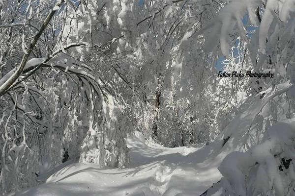 Snow in Tirana Albania