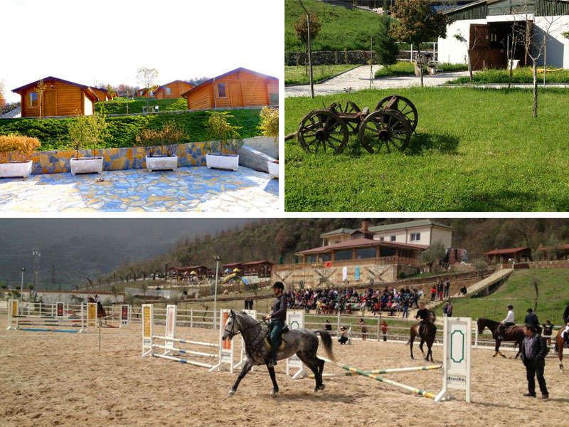 Sports in Tirana