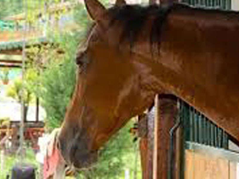 Equestrian Sport in Tirana, Albania
