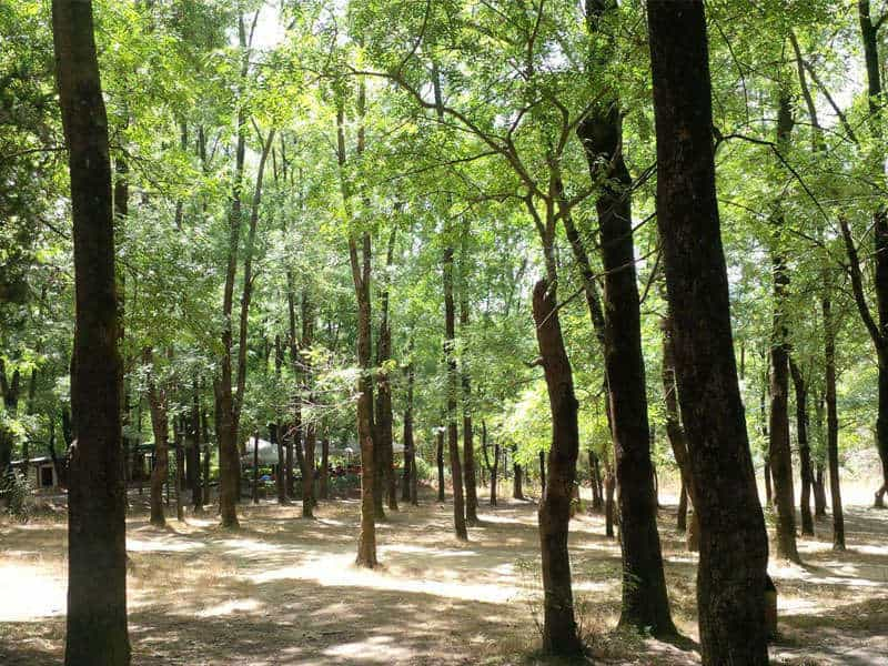 Il Grand Park di Tirana
