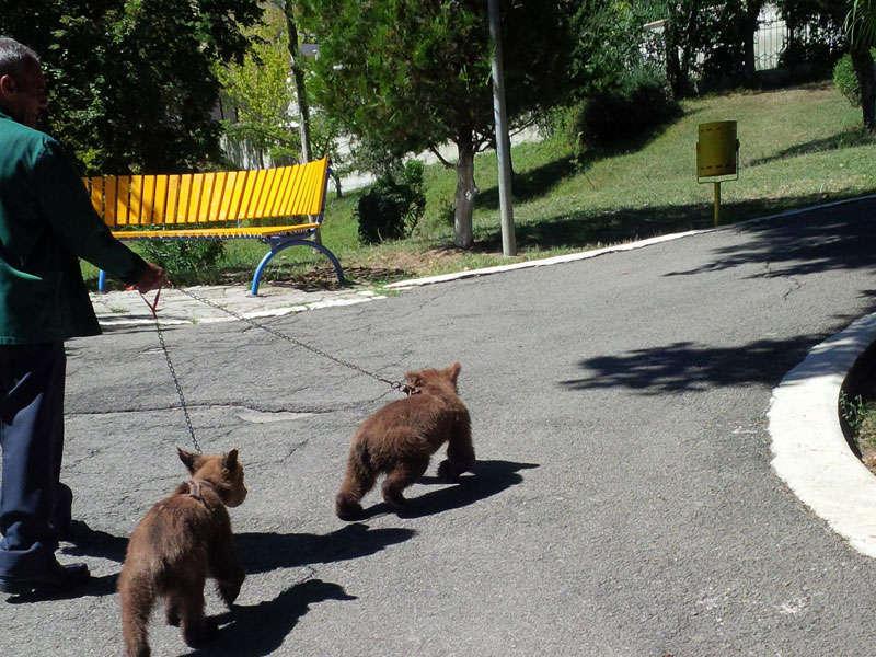Kopshti zoologjik Tirane