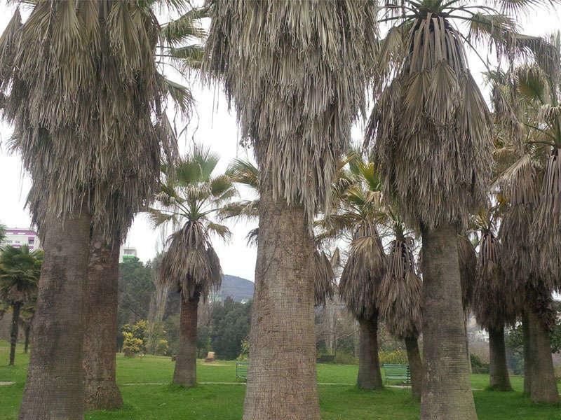 TIrana Botanic Garden