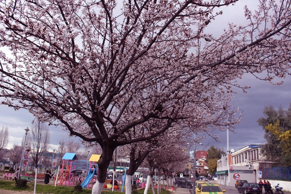 what to do in March in Tirana