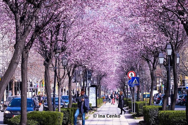 Things to do in Tirana in March!