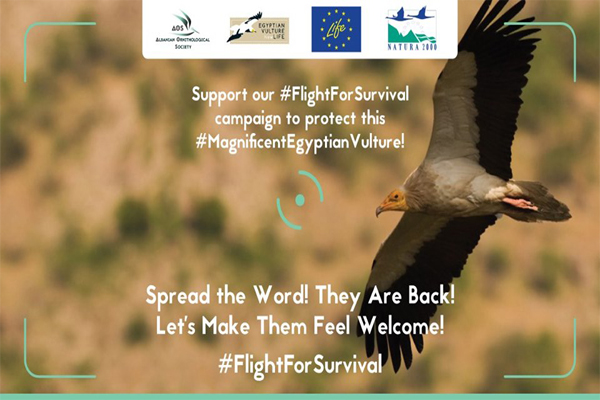 Flight for Survival campaign